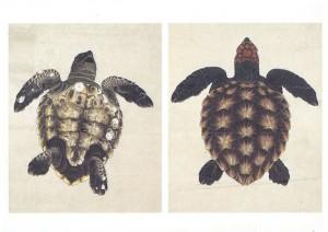 (23)「海亀図」